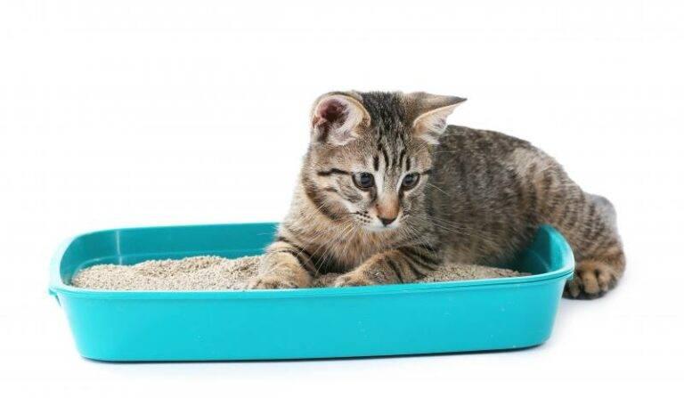 Как правильно ухаживать за котенком: советы, правила и рекомендации