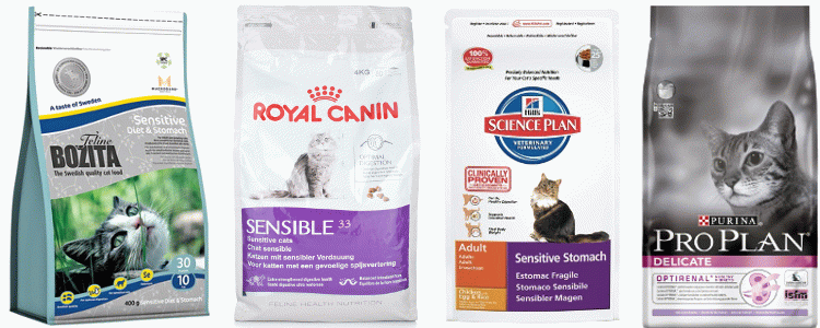 Выбираем какой сухой корм для кошек лучше: отзывы ветеринаров, сравнение сухого и влажного, классификация и рейтинг сухих кормов