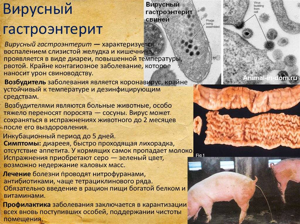 Болезни кошек – симптомы, лечение и профилактика самых распространенных заболеваний
