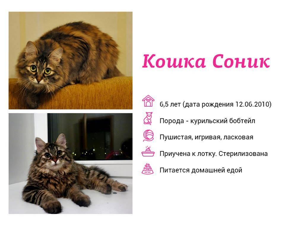 Сонник большой кот. к чему снится большой кот видеть во сне - сонник дома солнца