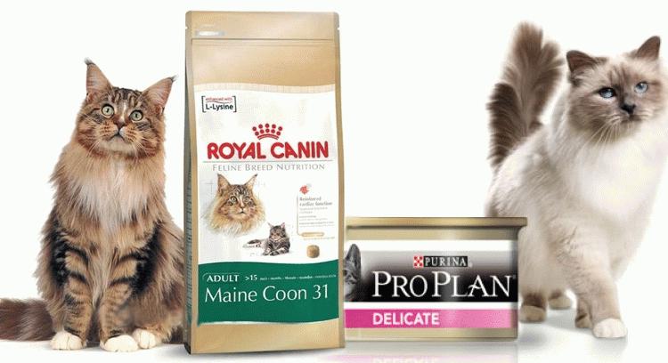 Корма холистики для кошек: рейтинг лучших сухих и влажных кормов холистик-класса для кошек, котов и котят. отзывы ветеринаров