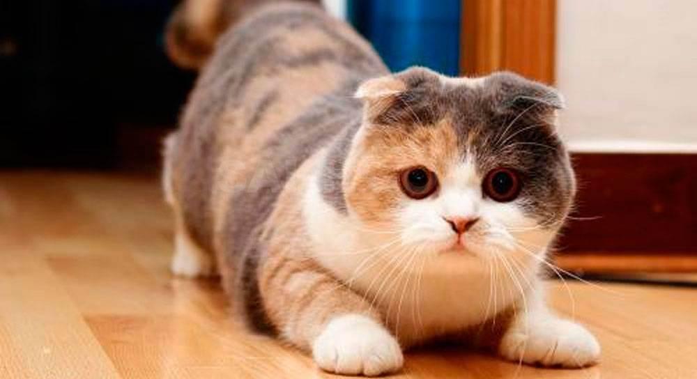 Стерилизация кошки - запись пользователя марина (mima) в сообществе домашние животные в категории помогите советом - babyblog.ru