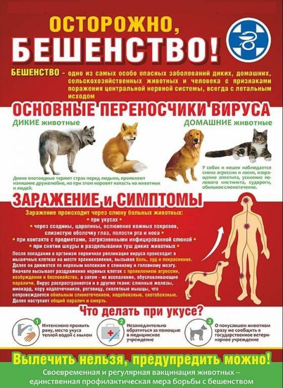Анализы на бешенство у кошек: виды и методы диагностики