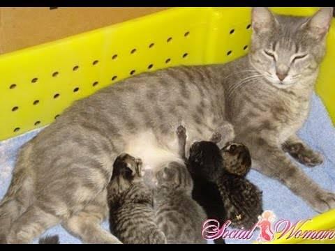 Когда у кошки начинают шевелиться котята