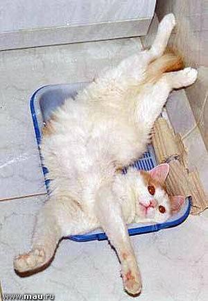 Ваши действия если котенок долго не ходит в туалет по-большому