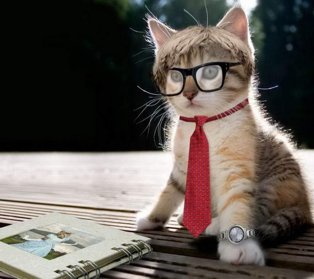 Три мифа об интеллекте кошек - kotoff - кошачий портал