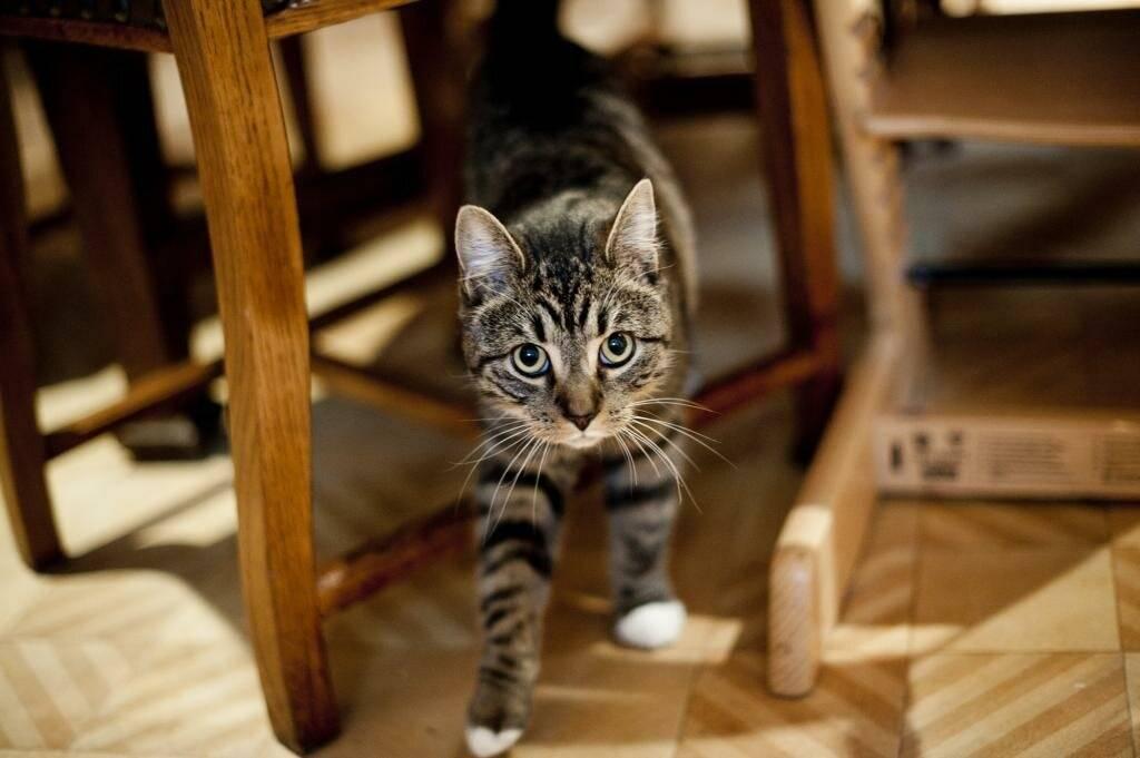 Как можно отучить кота метить территорию