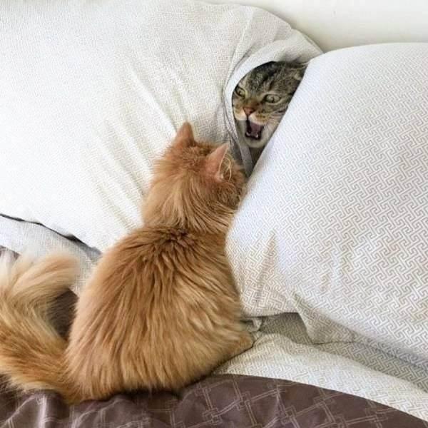 Почему кошка гадит на кровать, народные приметы