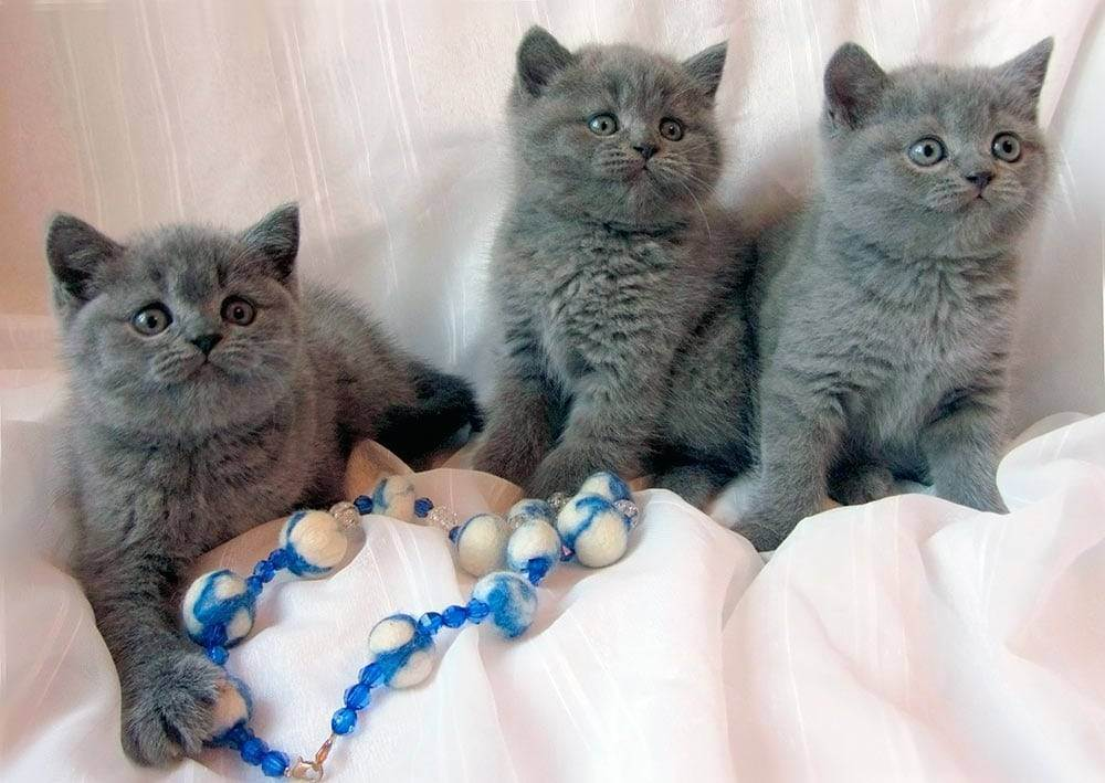 Какие прививки делают кошкам и когда