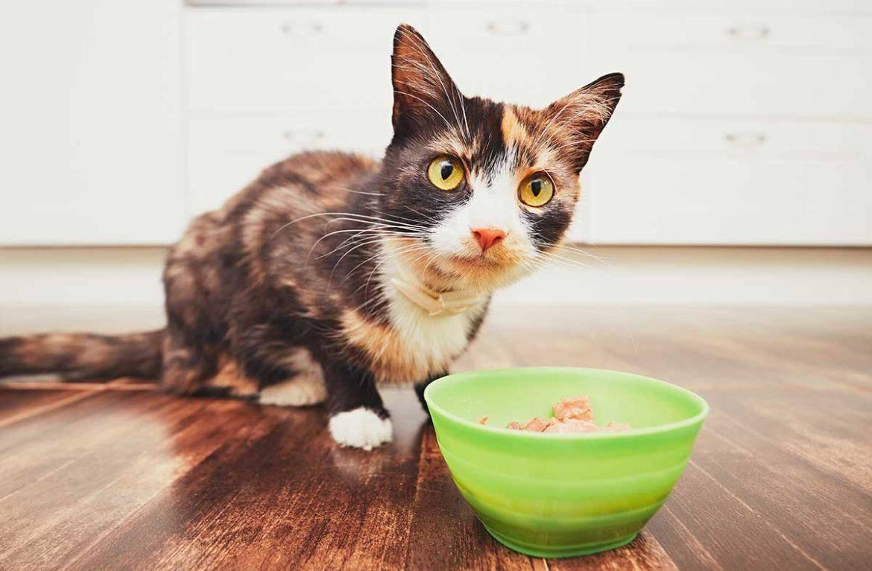 Почему кошка не ест [13 причин и что делать]