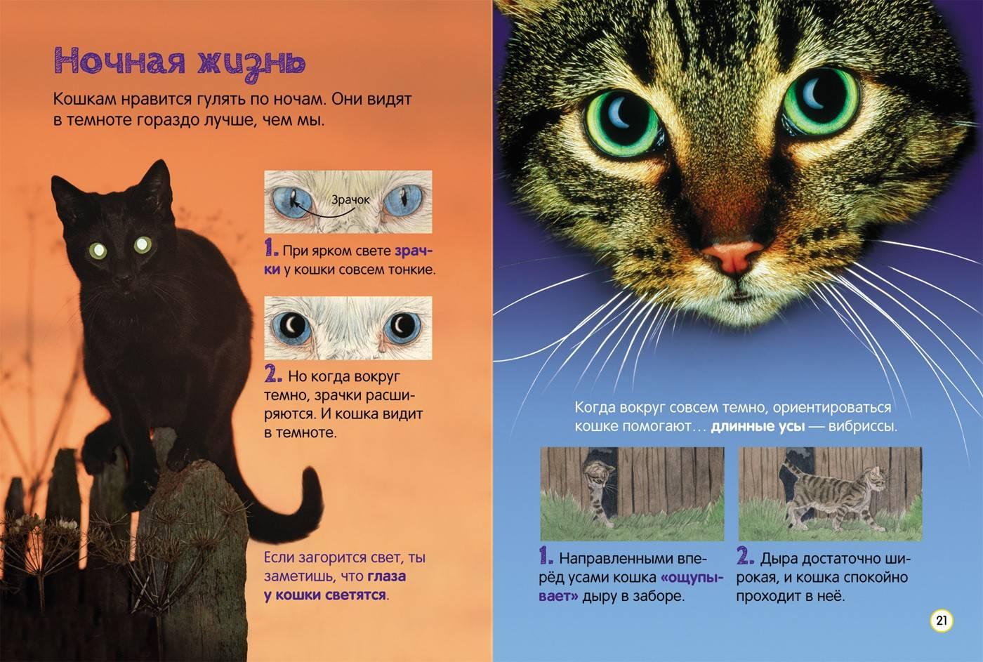 Интересные факты о кошках: самое удивительное