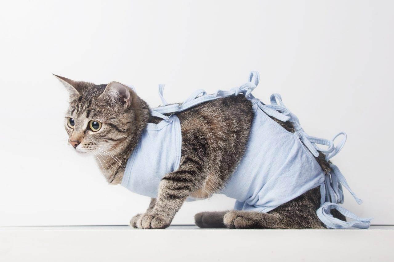 Стерилизация кошки на дому: каким способом и как подготовится