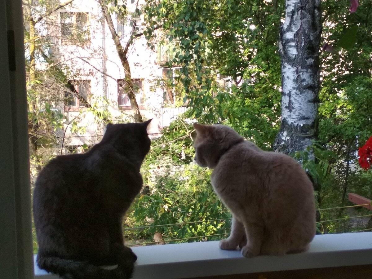 Как подружить кота и котенка?