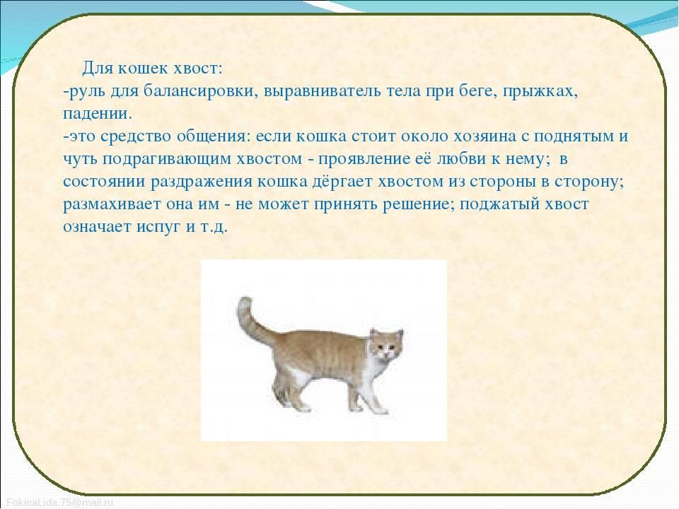 Кошка трясет хвостом: что это значит?