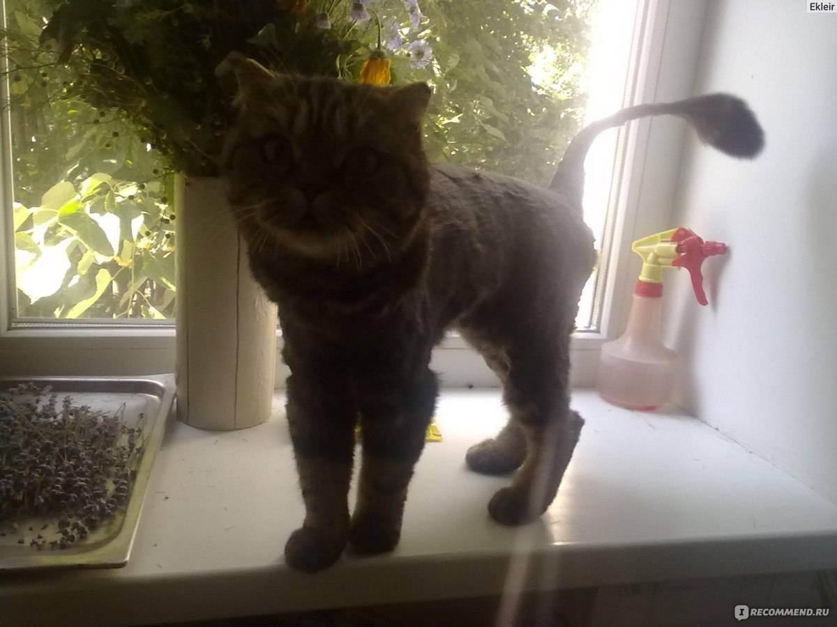 Зачем стригут котов и нужно ли это делать