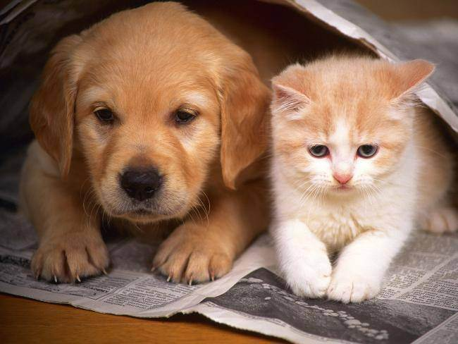Как проявляется панкреатит у кошки