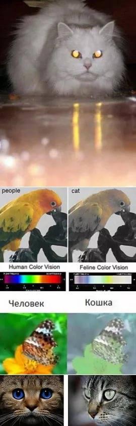 Различают ли кошки цвета?