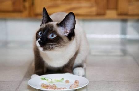 Миски для кошек: плюсы и минусы разных типов. как выбрать миску для кошки