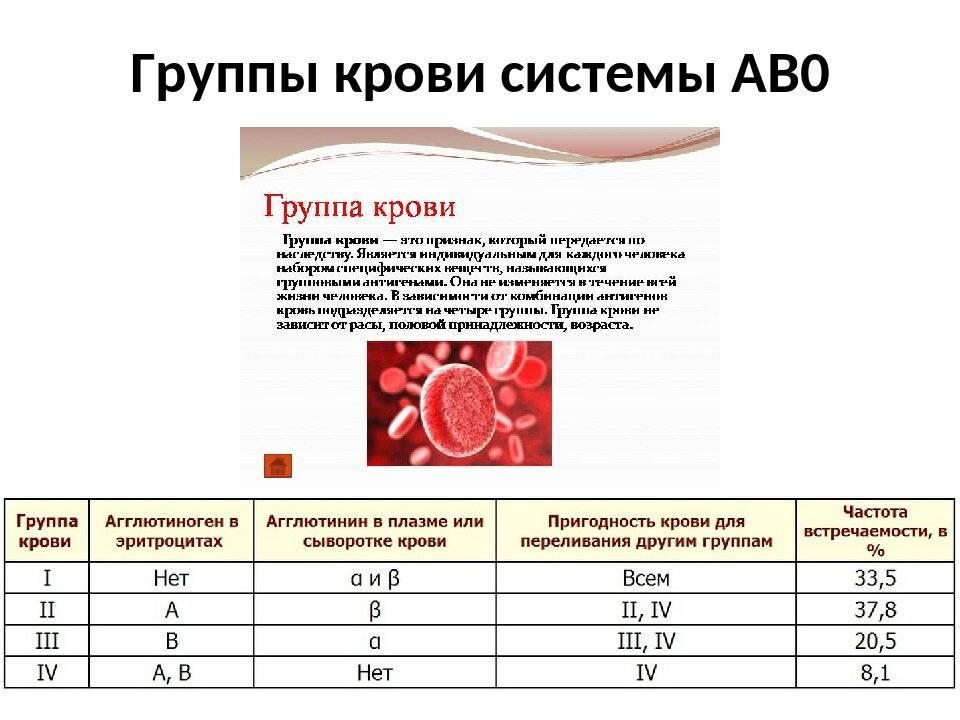 Группы крови у кошек и котов: есть ли, сколько, таблица