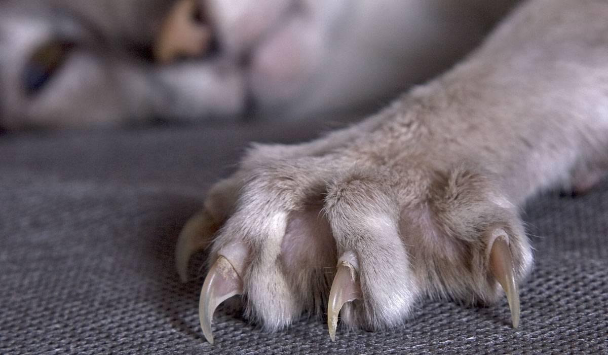 Уход за когтями кошки и кота