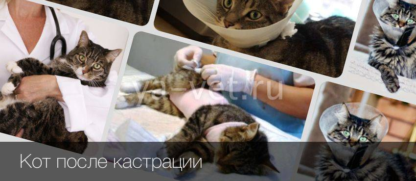 Как подготовить к стерилизации кошку, нужно ли делать прививки, можно ли ее кормить: советы ветеринара по подготовке