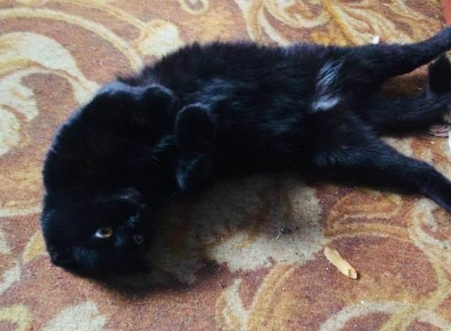 Как меняется кошка после родов