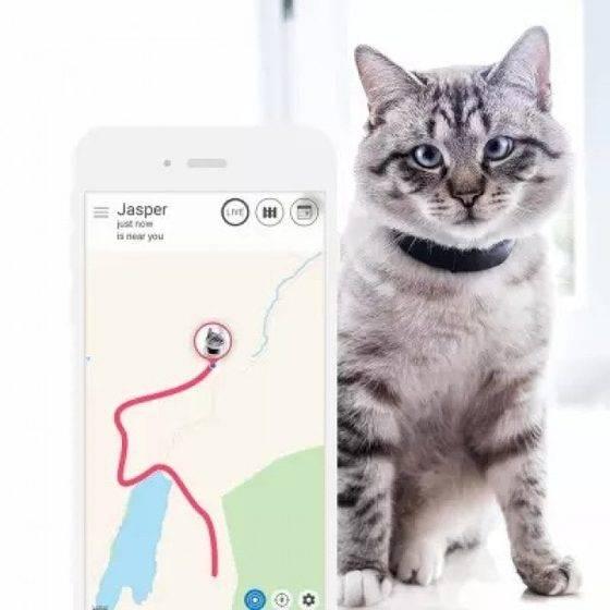 Ошейники для кошек от блох и клещей: принцип действия и способ использования