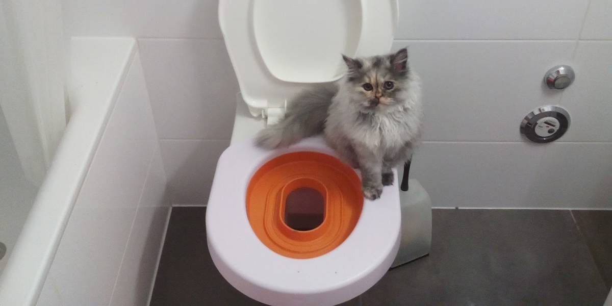 Кот не ходит в туалет по маленькому: причины, что делать