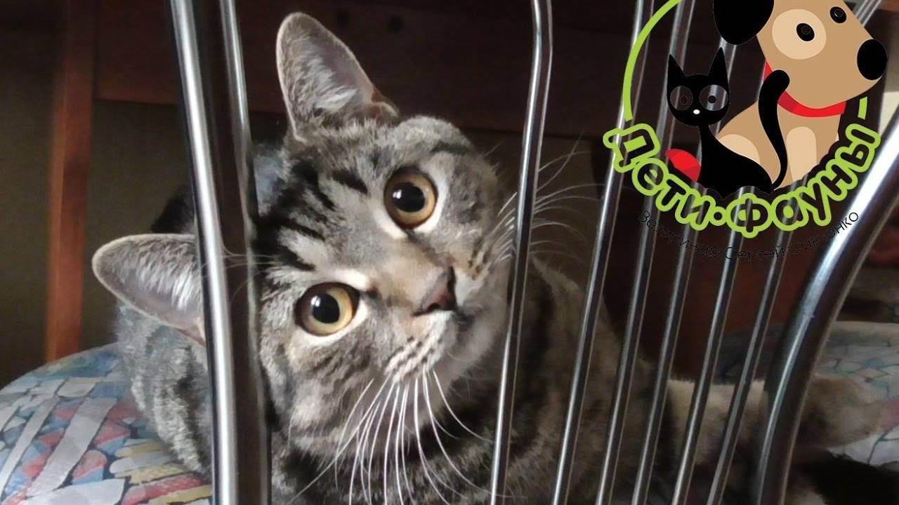Возможные проблемы и советы по уходу за кошкой после стерилизации