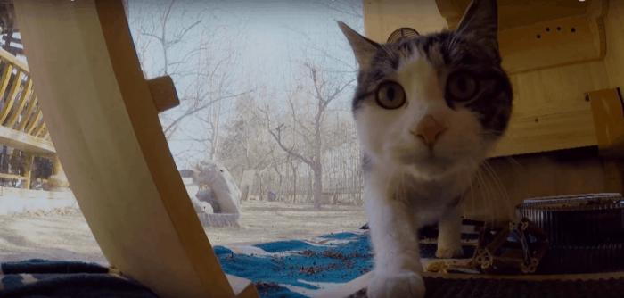 Самые умные кошки (38 фото): какие породы котов самые умные? рейтинг интеллектуальных кошек в мире, признаки интеллекта