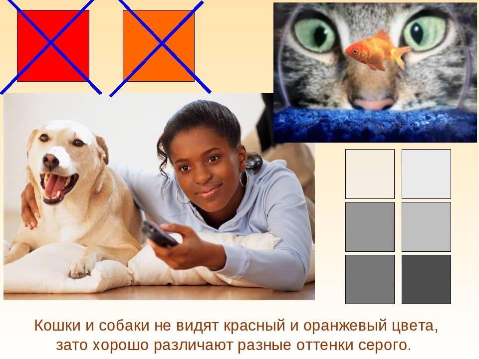 Какие цвета видят кошки и как они смотрят на мир