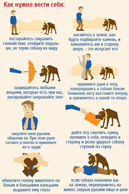 Как воспитать котенка? этапы правильного воспитания котов и кошек в домашних условиях. как воспитать котенка ласковым и спокойным и можно ли его бить?