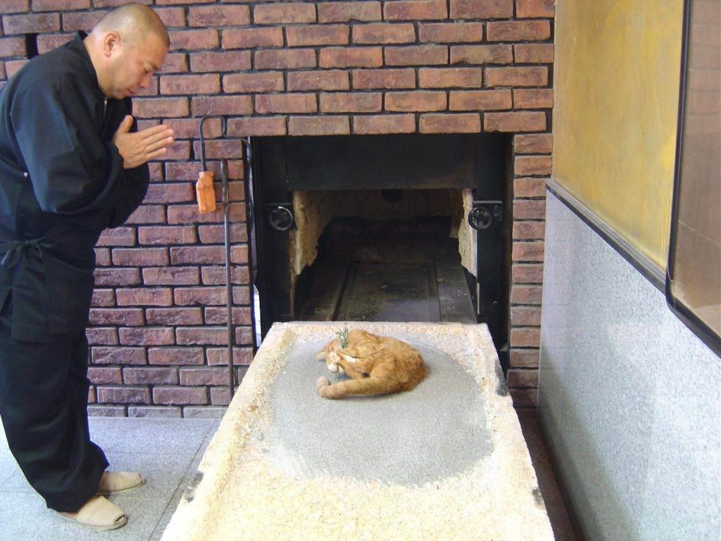 На какой день хоронят кошку. где и как правильно похоронить кошку. как почтить память питомца и не нарушить законы, а есть ли выбор