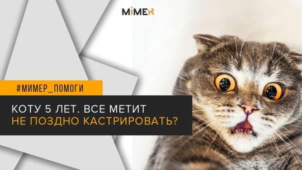 Что делать, если кастрированный кот орет по ночам
