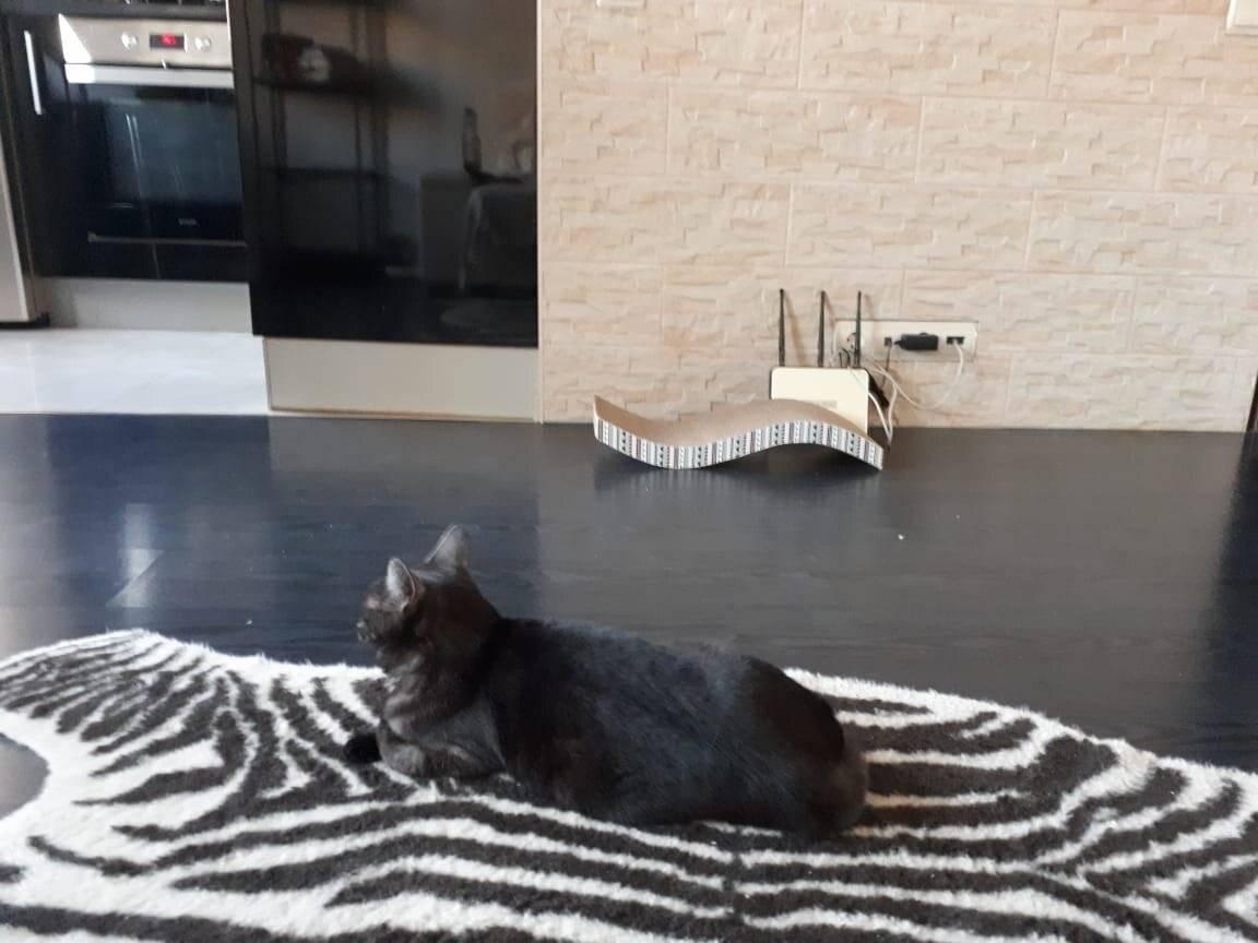 Как отучить кота царапать мебель? ⋆ citywoman