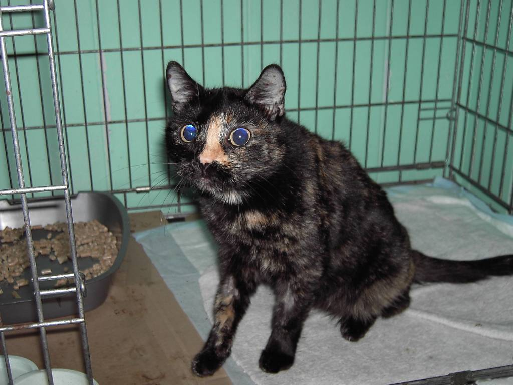 """Панлейкопения у кошек: симптомы, профилактика     блог ветклиники """"беланта"""""""