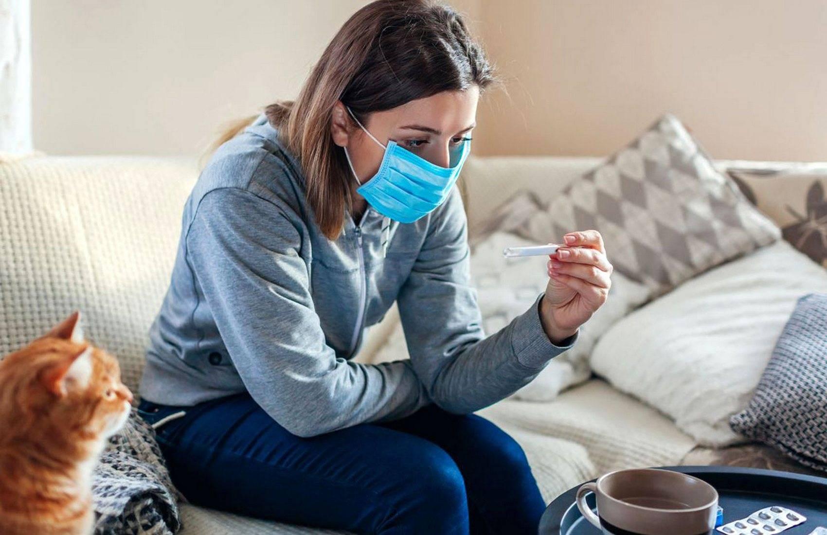 Кошачья простуда: вся важная информация о заболевании