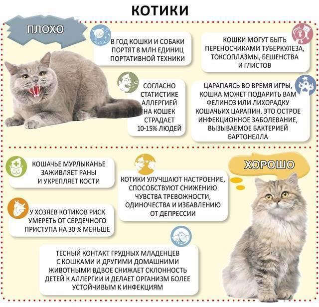 Рацион питания для британской породы кошек