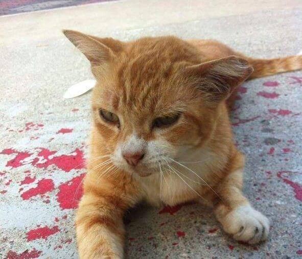 Причины по которым кошка чихает кровью
