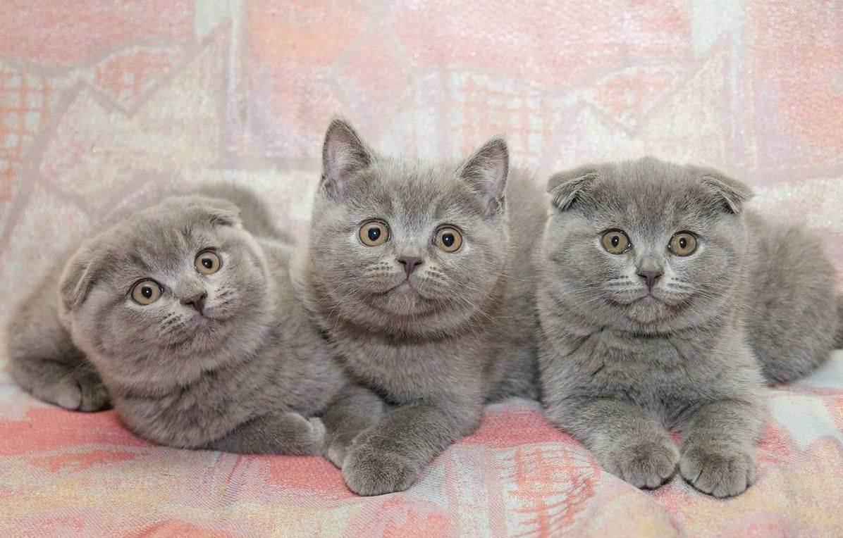 Как подготовить квартиру к появлению котенка