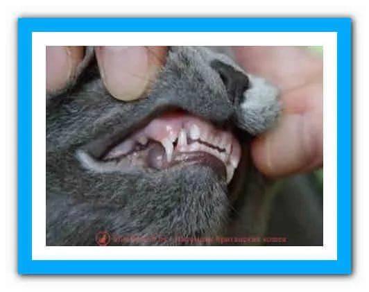 Как определить возраст котенка   сколько месяцев