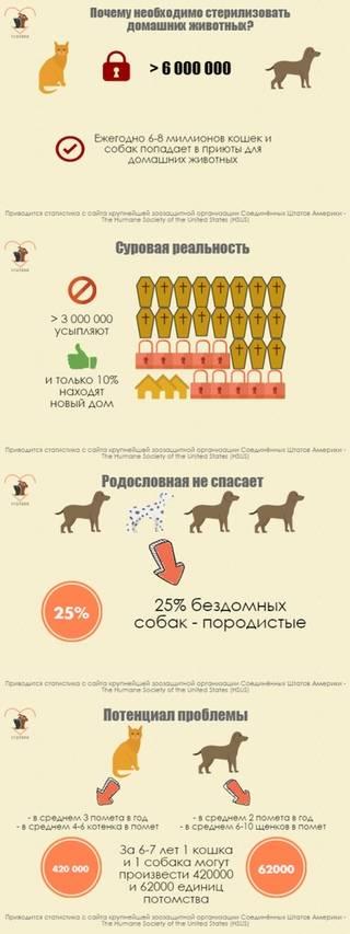 Как решиться на стерилизацию кошки? за и против. полезные советы