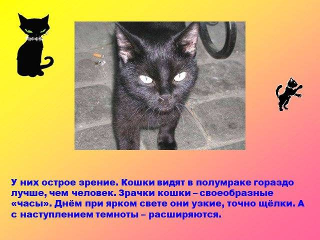 Что видят кошки чего не видят люди