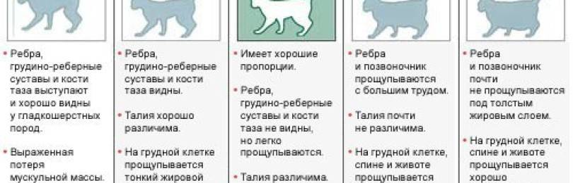 Чем кормить кота чтобы набрал. очень худая кошка – как её откормить - новая медицина