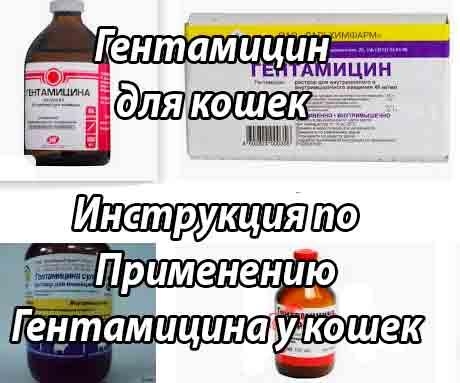 Гентамицин - форма выпуска, как принимать антибиотик, механизм действия, противопоказания и отзывы