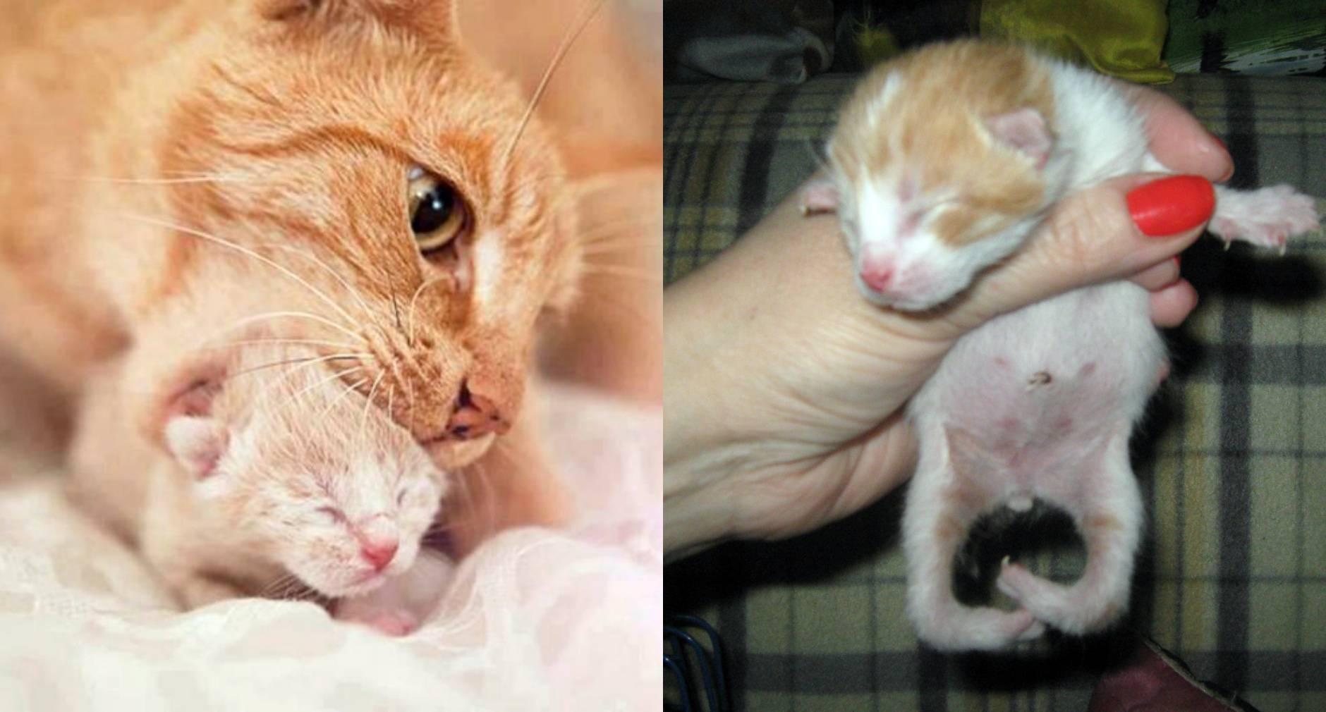 Кошка после родов беспокойная мяукает: кровяные выделения на второй день, что делать