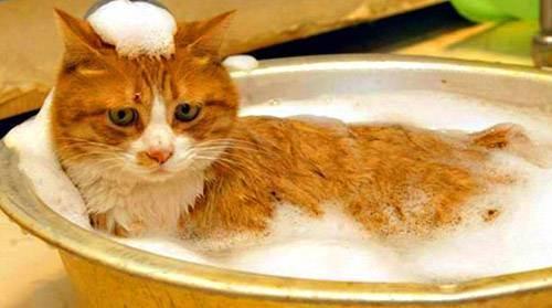 Как правильно купать кота или кошку: рекомендации и важные правила