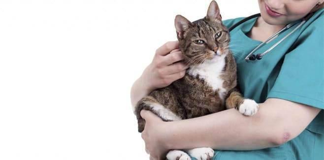 Как правильно выбрать ветеринарную клинику? - любимчики.ру