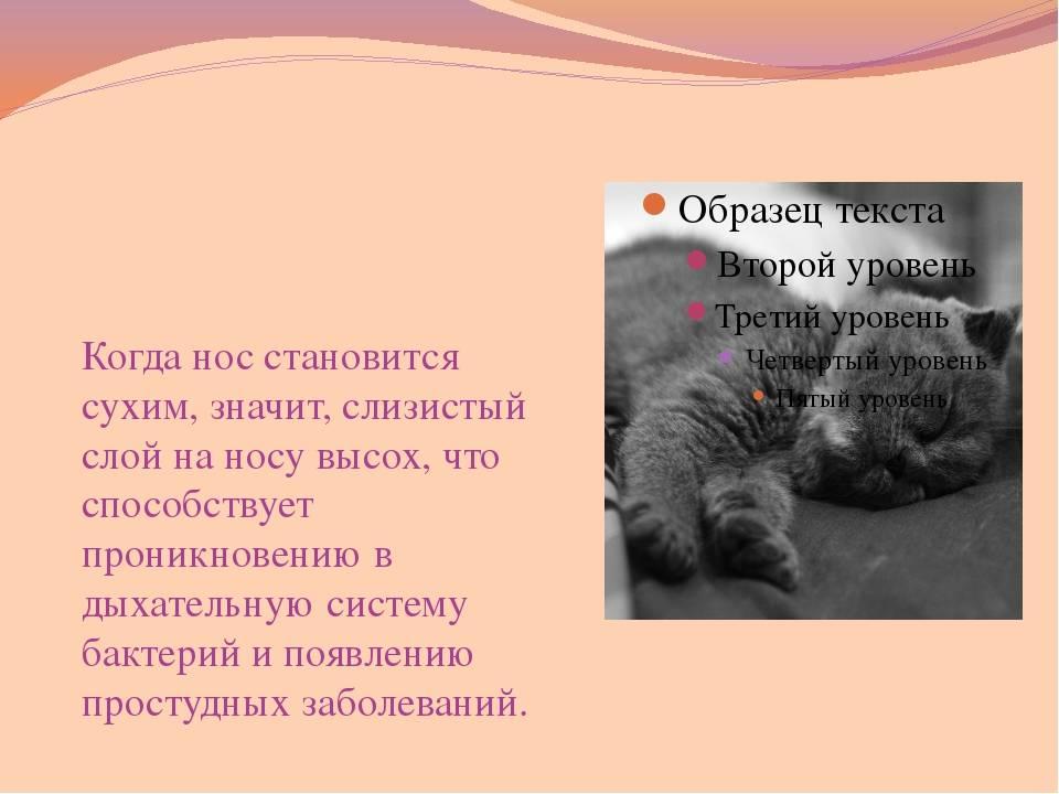 Какой нос должен быть у здоровой кошки и кота: мокрый или сухой