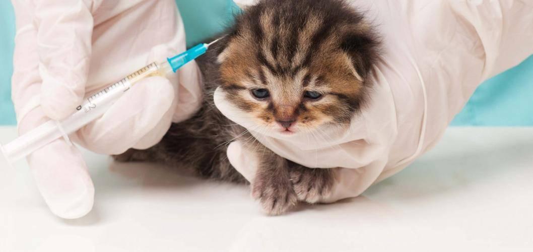 Какими препаратами лучше всего лечить кошку от лишая в домашних условиях